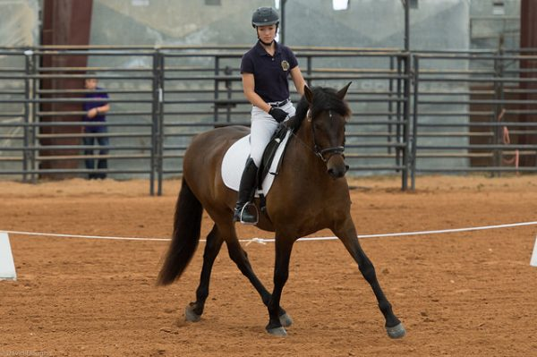 Dripping Springs Ranch Park Horse Shows - Dripping Springs, TX - 2018 Schedule